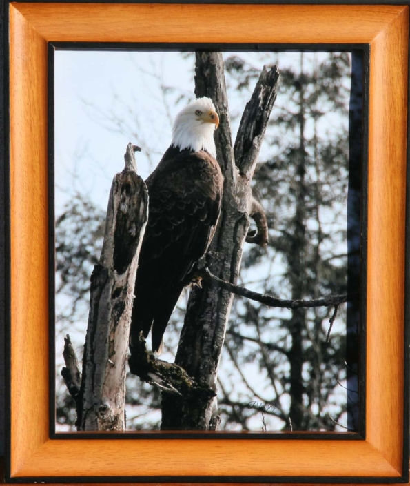 Terry Potoczny | The Eagle print 8 x 10 is $35